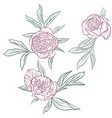 floral set peonies vector image vector image