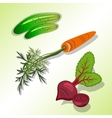 Food vegetable set Beet carrot with tops vector image vector image