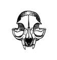 skull a cat art vintage vector image