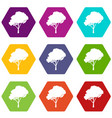 tree with a rounded crown icon set color vector image vector image