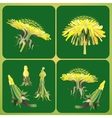 with dandelions vector image vector image