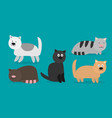cute cats set kittens of different colours vector image vector image