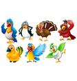 different species birds vector image vector image