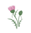 elegant detailed botanical drawing of thistles vector image vector image