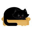 big cat on couch asleep huge pet on sofa vector image vector image