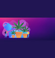 cannabis cultivation concept banner header vector image vector image