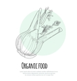 Hand drawn fennel over white background vector image vector image
