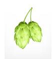 hop plant icon vector image vector image
