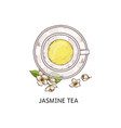 jasmine tea top view drawing - glass cup with vector image vector image