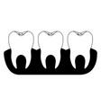 teeth with tooth root view in black silhouette vector image