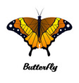 black brown orange butterfly white background vect vector image