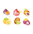 juicy ripe tropical fruit collection persimmon vector image