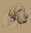 monochrome great dane hand drawing portrait vector image vector image