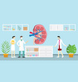 open or sliced kidneys on laboratory with vector image