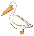 white pelican bird on white background vector image vector image