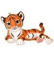 Baby Tiger vector image