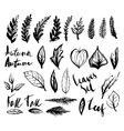 Doodle leaves set vector image vector image