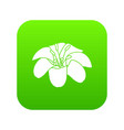 lily flower icon green vector image