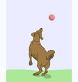 dog catches ball vector image vector image