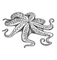 fresh octopus hand drawn isolated icon vector image vector image