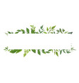 card design with green fern leaves herbs plants vector image vector image