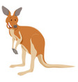 funny kangaroo cartoon animal character vector image