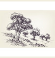 olive trees orchard hand drawing vector image