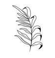 outline tropical plant branch with nature leaves vector image vector image