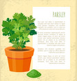 parsley poster and text sample vector image vector image