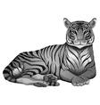 A grey tiger vector image vector image