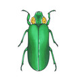 bug green hand drawn insect vector image