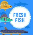 water animal fresh fish blue postcard vector image vector image