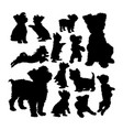 yorkshire terrier dog animal silhouettes vector image