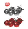 hand drawn cherry tomatoes vector image