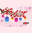 chinese new year 2019 with lantern cherry blossom vector image