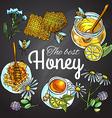 sweet honey vector image