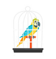 animal pet parrot in birdcage vector image vector image