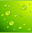 fresh green dew dros vector image
