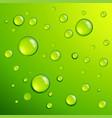 fresh green dew dros vector image vector image