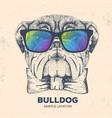 hipster animal bulldog hand drawing muzzle vector image vector image