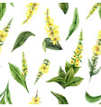 watercolor seamless pattern with mullein vector image vector image
