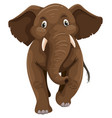baby elephant with brown skin vector image vector image