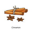 cinnamon stick and flower drawing set vector image vector image