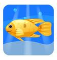 cute tropical fish orange color in sea ocean vector image