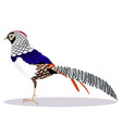lady amherst pheasant bird vector image vector image