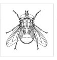 line drawing of fly -simple line vector image