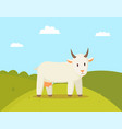 goat stroll on glade colorful vector image
