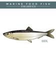 Herring Marine Food Fish vector image vector image