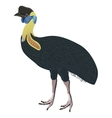 southern cassowary bird detalised on white vector image