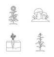 sunflower mushrooms and other vegetablesplant vector image vector image